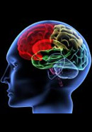 Neurobiológia